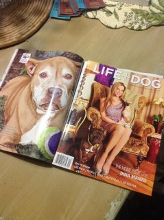 Angel is featured in Life + Dog
