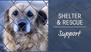 shelter-rescue-support